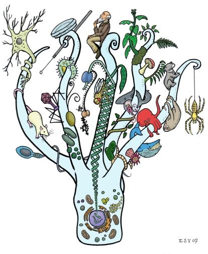 Bio Branches