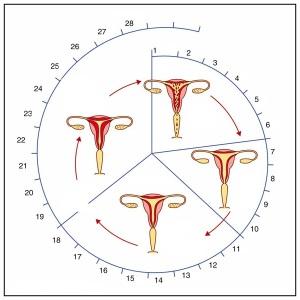 menstral12 - Kopia