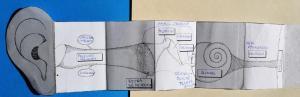 Papierowy model ucha