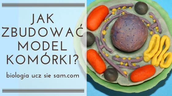 Garść naprawdę praktycznych porad oraz inspirujące zdjęcia, które pomogą ci zbudować model komórki zwierzęcej/ roślinnej.