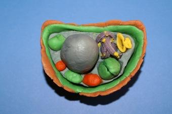Garść naprawdę praktycznych porad oraz inspirujące zdjęcia, które pomogą ci zbudować model komórki zwierzęcej/roślinnej.