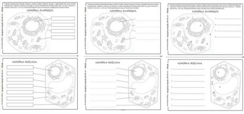 Praktycznie ćwiczenie do ściągnięcia za darmo - schematy budowy komórki zwierzęcej i roślinnej do podpisania, pokolorowania i wklejenia do zeszytu.
