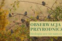 Patrzenie a obserwacja przyrodnicza - tekst wprowadzający. Biologia ucz się sam - blog.